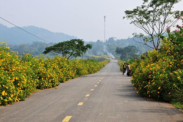 Đẹp đến không tưởng tượng nổi con đường hoa dã quỳ dưới chân núi Ba Vì - Ảnh 5.