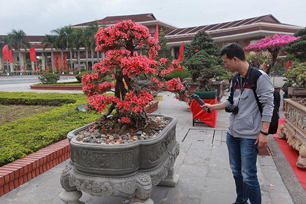 Anh Thành, thị trấn Sa Pa (Lào Cai), chủ nhân của cây đỗ quyên cho biết, đây là cây đỗ quyên đẹp nhất trong vườn cây đỗ quyên của anh mang xuống triển lãm tại Bắc Ninh. Hiện tại, trên Lào Cai, anh có khoảng 300 cây, toàn cây có tuổi đời lâu năm.