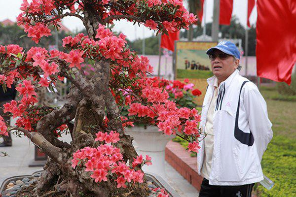 """Cây ra hoa đỏ rực, nhìn rất mê nên thường được gọi là """"nữ hoàng quyên"""" bởi đây là giống hoa đẹp nhất trong các loài đỗ quyên, anh Thành giải thích."""