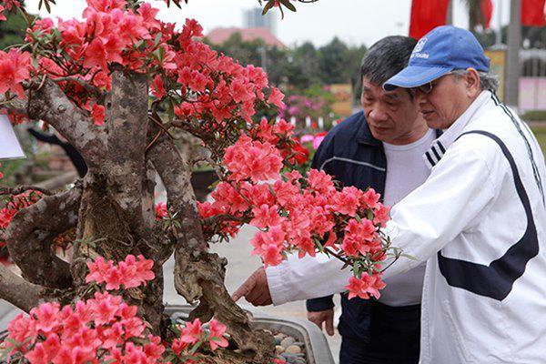 Đỗ quyên cổ thụ này là đỗ quyên có nguồn gốc bên Lào,  ở Việt Nam giống cây này gần như đã tuyệt chủng. Để sở hữu được cây đỗ quyên cổ thụ này, anh Thành phải sang tận bên Lào mua lại của những người dân tộc bên đó.