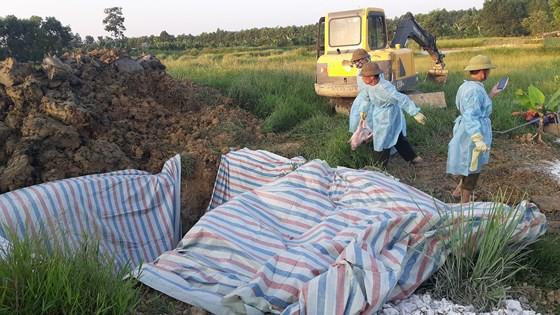 Lực lượng chức năng tiến hành tiêu hủy đàn lợn. Ảnh: TL