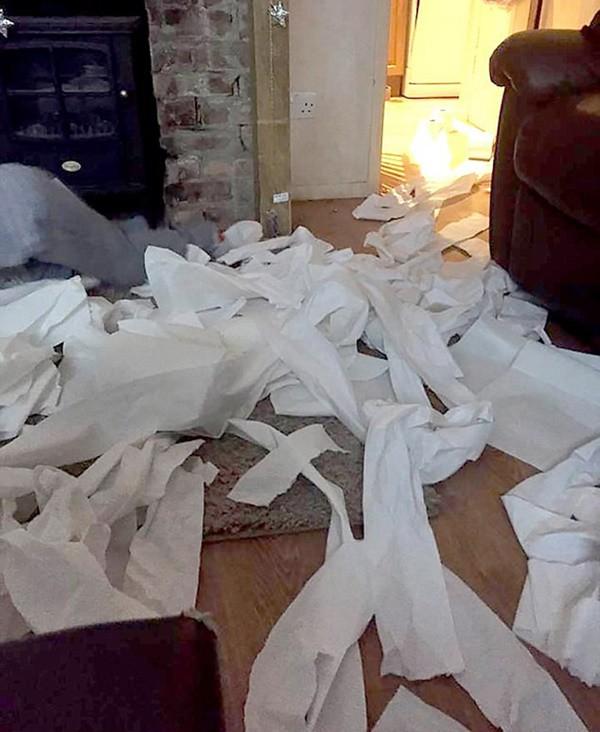 Phòng con gái ngập giấy vệ sinh bốc mùi, người mẹ bàng hoàng phát hiện sự thật đau lòng đằng sau - Ảnh 1.