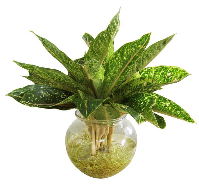 Đầu năm đừng quên đặt 5 loại cây nghe tên rất mỹ miều này trên bàn làm việc để tài lộc vào như nước - Ảnh 6.