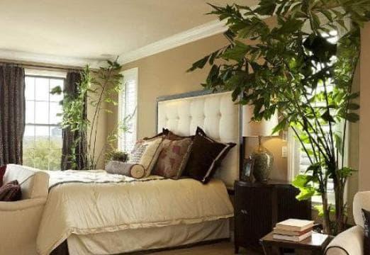 Những cây cảnh nào nên và không nên đặt trong phòng ngủ? - Ảnh 1.