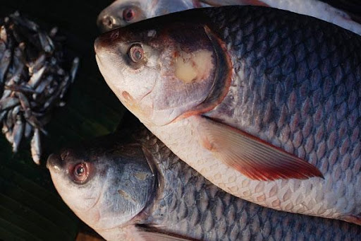 5 cách chế biến cá nếu ăn thường xuyên chẳng khác nào uống thuốc độc - Ảnh 4.