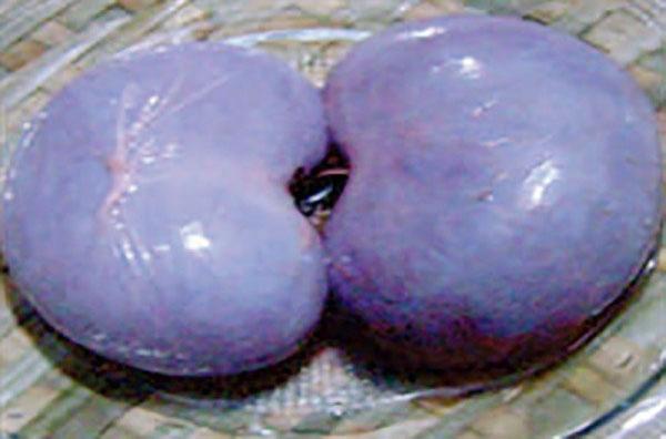 Các món ngon dễ nấu dễ ăn từ con dê giúp tăng cường bản lĩnh đàn ông - Ảnh 2.