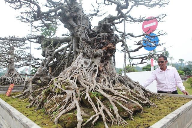 Đã mắt với vẻ kỳ quái, hầm hố của siêu cây, trả bao nhiêu cũng không bán - Ảnh 3.