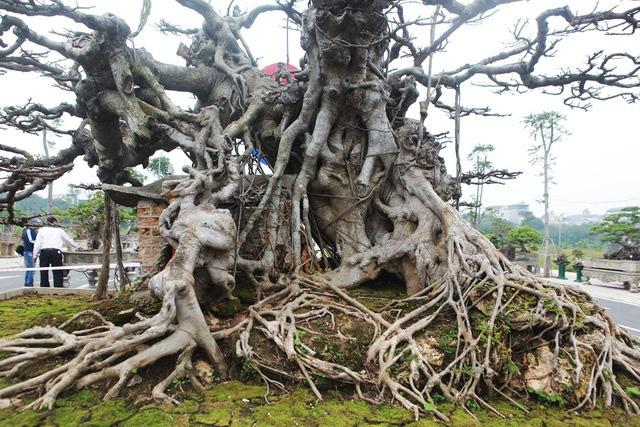 Đã mắt với vẻ kỳ quái, hầm hố của siêu cây, trả bao nhiêu cũng không bán - Ảnh 4.