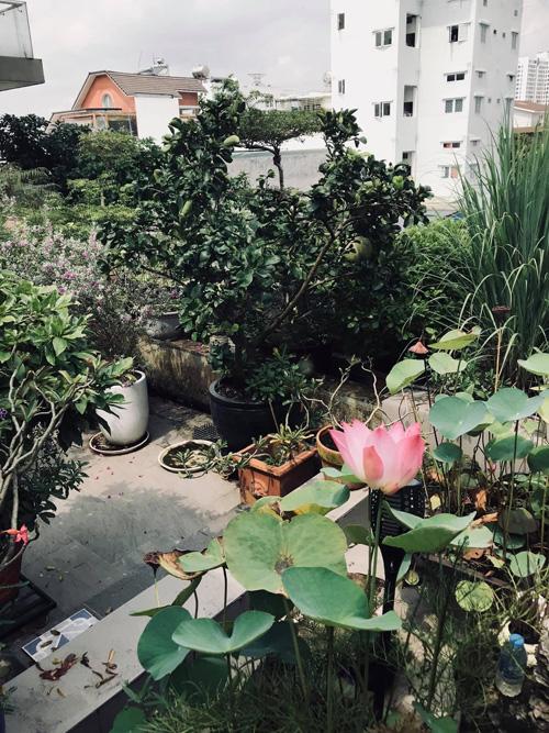 Mẹ Hồ Ngọc Hà tập Yoga, hít thở không khí trong lành trong khu vườn trên sân thượng - Ảnh 4.