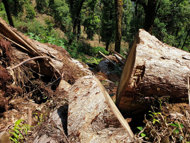 """Yên Bái: Kỷ luật hàng loạt cán bộ vụ rừng Khu bảo tồn """"chảy máu"""" - Ảnh 2."""