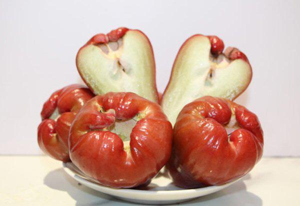 Quả roi có tác dụng tốt và nhiều dinh dưỡng - Ảnh 3.