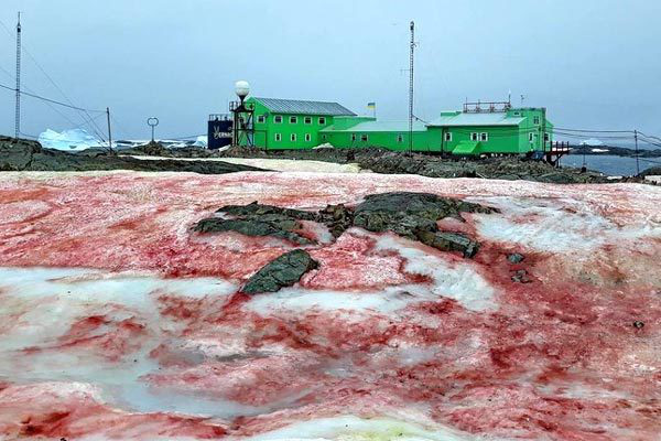 Tuyết đỏ như máu bao phủ quanh trạm nghiên cứu ở Nam cực - Ảnh 1.