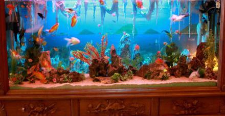 Người mệnh này trong phong thủy tuyệt đối tránh đặt bể cá cảnh trong nhà - Ảnh 3.