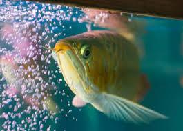 Người mệnh này trong phong thủy tuyệt đối tránh đặt bể cá cảnh trong nhà - Ảnh 6.