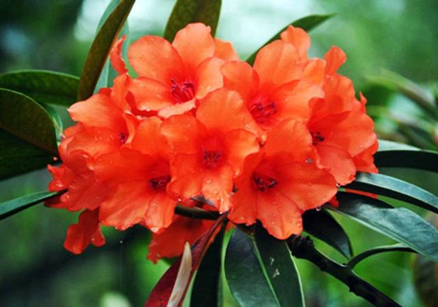 Nhiều loài hoa dại thành bon sai trăm triệu ở Đà Lạt - Ảnh 1.
