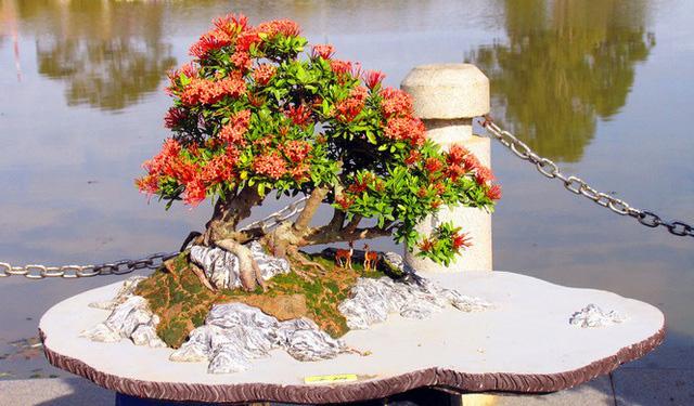 Nhiều loài hoa dại thành bon sai trăm triệu ở Đà Lạt - Ảnh 4.