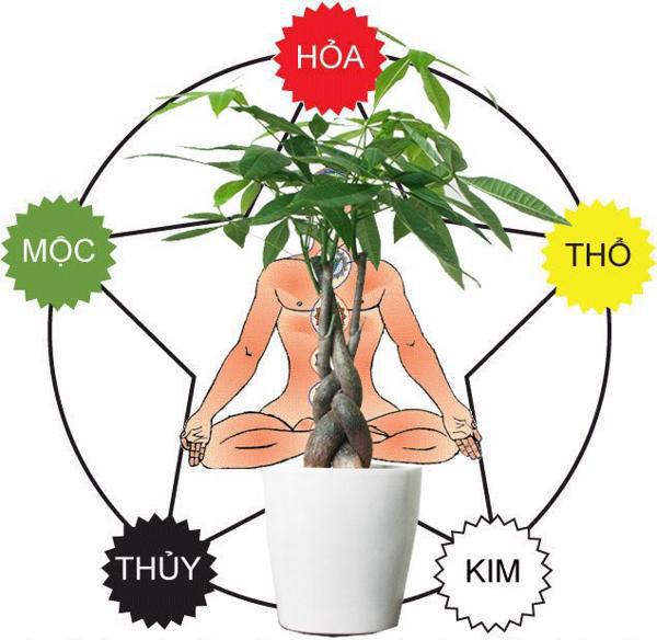 Loại cây thường thấy này lại là cây hút tiền, may mắn, giàu có, thịnh vượng trong phong thủy, còn đuổi được muỗi - Ảnh 6.