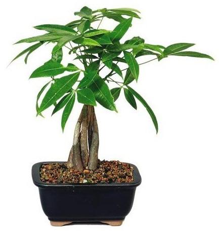 Loại cây thường thấy này lại là cây hút tiền, may mắn, giàu có, thịnh vượng trong phong thủy, còn đuổi được muỗi - Ảnh 3.