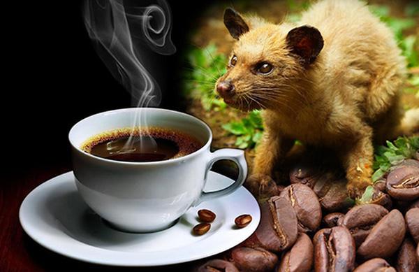Sự thật rùng mình đằng sau loại cà phê mà nhiều người thích uống - Ảnh 1.