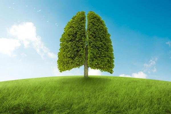 BoniDetox – Bí quyết vàng giải độc phổi do ô nhiễm không khí và hút thuốc lá - Ảnh 1.
