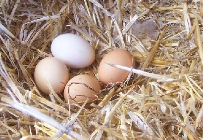 Cô giáo mua trứng của bà lão dân tộc với giá cao và bất ngờ nhận được cái kết vô cùng cảm động - Ảnh 2.