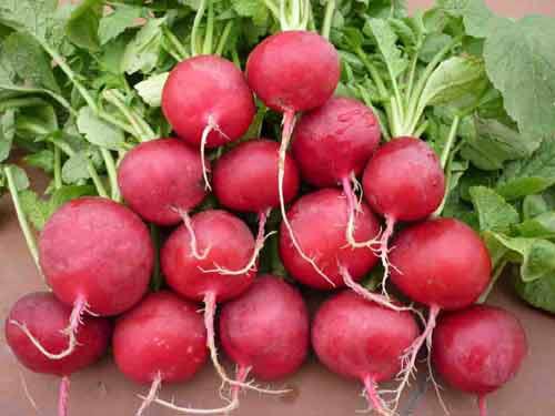 9 loại thực phẩm đặc biệt tốt nhất thiết phải có trong tủ lạnh bởi chúng không chỉ đầy dinh dưỡng mà còn là dược liệu - Ảnh 8.