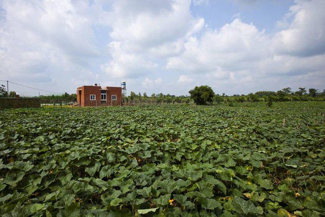 """Nhà vườn rộng 90m2 ở Đồng Nai gây """"sốt"""" vì xây dựng chỉ 500 triệu đồng - Ảnh 3."""