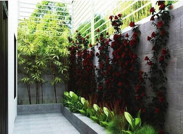 Mướt mắt với những mẫu vườn tí hon siêu đẹp cho nhà diện tích nhỏ - Ảnh 7.