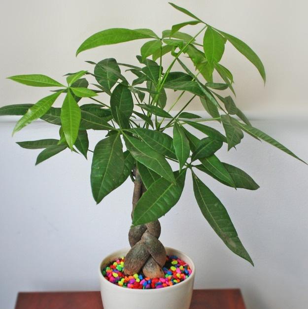 8 loại cây cảnh để bàn làm việc cực dễ chăm sóc mà lại đẹp lung linh - Ảnh 1.