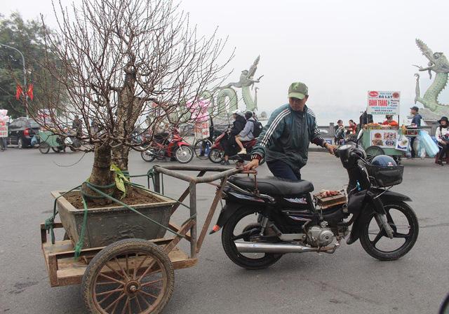 Người vận chuyển chạy sô, kiếm tiền triệu mỗi ngày nhờ chở cây cảnh - Ảnh 1.
