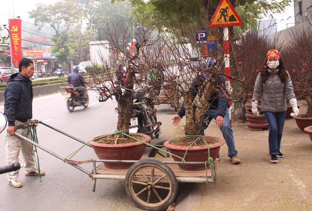 Người vận chuyển chạy sô, kiếm tiền triệu mỗi ngày nhờ chở cây cảnh - Ảnh 3.