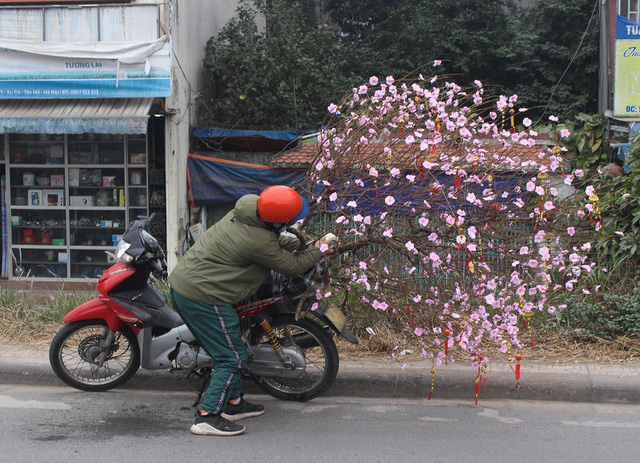 Người vận chuyển chạy sô, kiếm tiền triệu mỗi ngày nhờ chở cây cảnh - Ảnh 4.