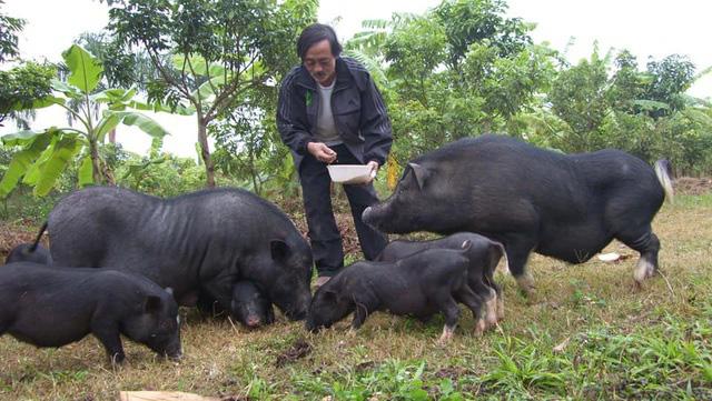 Sao Việt sở hữu biệt thự, cát- sê ngất ngưởng vẫn thích làm… nông dân - Ảnh 7.