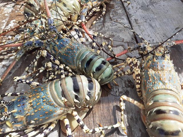 قیمت خرچنگ دریایی به شدت افزایش یافت ، بازرگانان هنوز کالایی نداشتند - عکس 1.