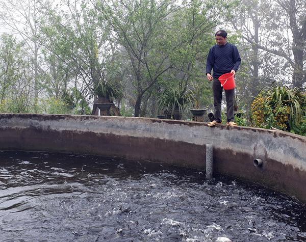 ماهی قزل آلا Sa Pa دوباره فوق العاده ارزان است ، سالانه 2 قطره شوک وجود دارد ، کشاورزان ضرر زیادی دارند - عکس 4.