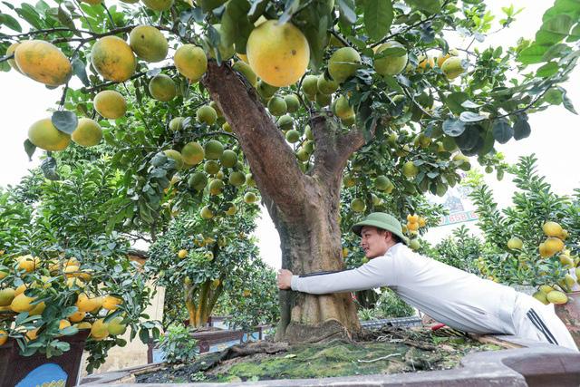 تحسین پوملو فوق العاده منحصر به فرد روستا ، به ارزش 200 میلیون VND در هونگ ین - تصویر 2.