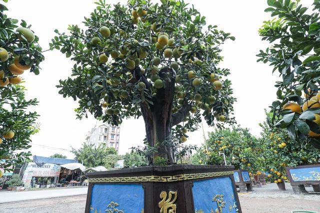 تحسین پوملو فوق العاده منحصر به فرد روستا ، به ارزش 200 میلیون VND در هونگ ین - عکس 3.