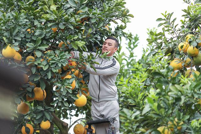 تحسین پوملو فوق العاده منحصر به فرد به سبک روستایی به ارزش 200 میلیون VND در هونگ ین - عکس 5.
