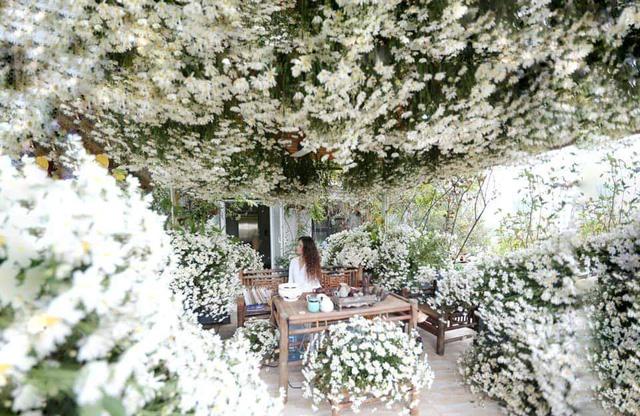 باغ گل غول پیکر در تراس خانمی از هانوی - تصویر 8.