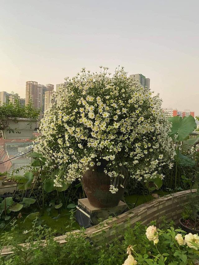 باغ گل غول پیکر در تراس خانمی از هانوی - تصویر 9.