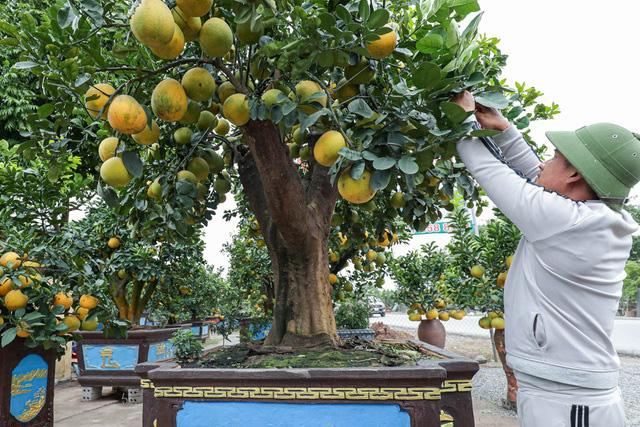 تحسین سبک فوق العاده منحصر به فرد پوملو روستایی به ارزش 200 میلیون در Hung Yen - تصویر 10.