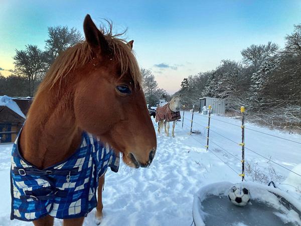 Hình ảnh người dân Texas oằn mình trong bão tuyết kỷ lục, đồ đạc trong nhà đóng băng, người dân chết vì mất điện - Ảnh 10.