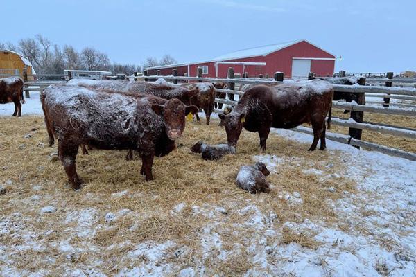 Hình ảnh người dân Texas oằn mình trong bão tuyết kỷ lục, đồ đạc trong nhà đóng băng, người dân chết vì mất điện - Ảnh 3.