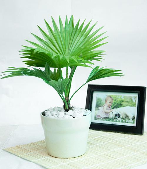 9 loại cây thanh lọc không khí trong nhà tốt nhất mà lại rất dễ trồng - Ảnh 4.