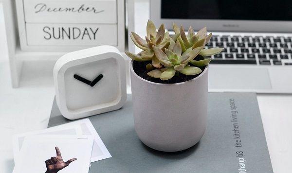 Bí quyết trang trí văn phòng làm việc bằng hoa tươi cực hay - Ảnh 3.