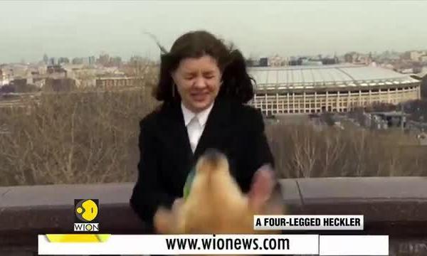 Chó cướp micro của phóng viên trên bản tin truyền hình - Ảnh 2.