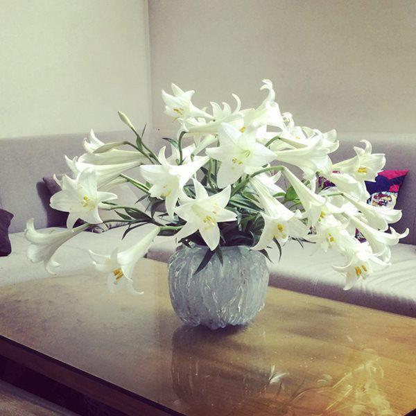 Bí mật về hoa loa kèn tháng Tư rất có thể bạn chưa biết - Ảnh 3.
