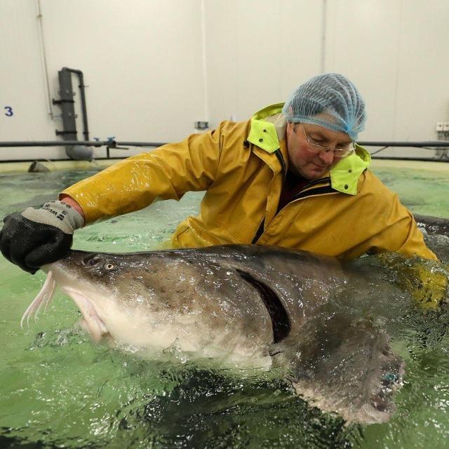 Bí mật nơi nông dân nuôi cá làm ra đặc sản thượng hạng hàng trăm triệu/kg - Ảnh 1.