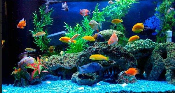 Đặt bể cá là rốn phong thủy trong nhà, lưu ý 3 điểm này đừng đặt bừa - Ảnh 1.