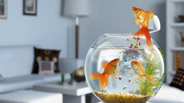 Đặt bể cá là rốn phong thủy trong nhà, lưu ý 3 điểm này đừng đặt bừa - Ảnh 2.